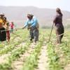 Tarım Sektöründe İş Güvenliği